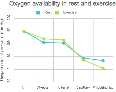 Oxygen availability in rest and exercise